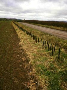 Hedge rows planted