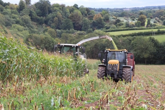 Maize harvesting with JCB Fastrac and Claas forager